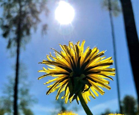 LOVENDE: Solfylte dager er i vente. Midt i uka skal dessuten temperaturen opp i 15-16 grader.