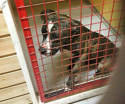 Denne hunden har bodd hos Bilbjørn Redning siden før jul. Nå etterlyser de eieren.