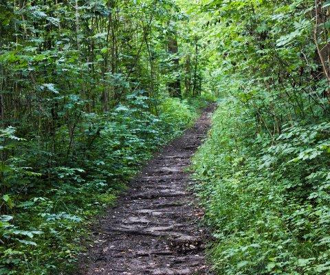 TURSTI: Er du en av dem som trives i skogen, har du kanskje hørt lydene om kvelden.