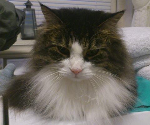 Pjuska har vært savnet fra Kykkelsrud i hele tre uker.