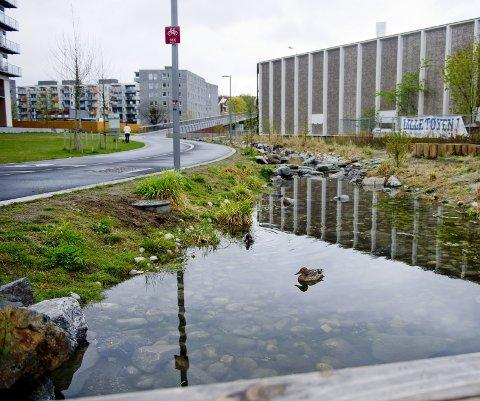 1 BEKK: Innbyggerne på Ensjø i Oslo har fått et gjensyn med Hovinbekken. Den er åpnet, og takler mer nedbør enn om den hadde gått i rør. Foto: NTB 2 MONSTERREGN: Det voldsomme regnet i København sommeren 2011 brukes gjerne som et eksempel på hvor vått og dyrt regnvær kan bli. Foto: Bax Lindhardt / NTB scanpix  3 Tettbebygd område: Nedbør kan ha store konsekvenser for avrenningen. Ill.: SINTEF Byggforsk  4 FLERBRUK: Prosjektet sØnes i danske Viborg er et eksempel på flerbruk i overvannsløsninger. En rensedam tar seg av regnvannet og har samtidig blitt en bypark. Foto: Orbicon