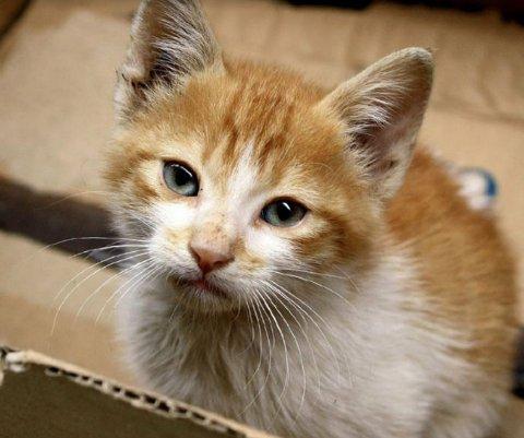 Ute: De fleste kattene har gode hjem, og ansvarsfulle eiere. Nå er det vår i lufta og livet ute byr på mye spennende for pus.