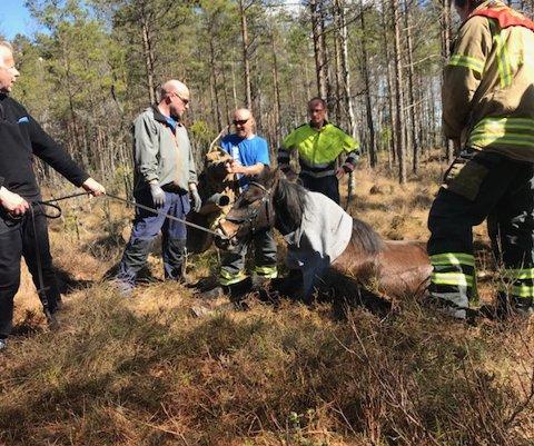 Satt fast: Hesten Bianca satt fast i myra i 1 1/2 time før hun ble reddet opp av Rakkestad brannvesen. Foto: Privat