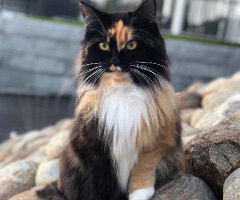 BLE SYK: Katten Frøya var syk i forrige uke, og mye kan tyde på at hun, i likhet med flere andre katter, har vært smittet av salmonella.
