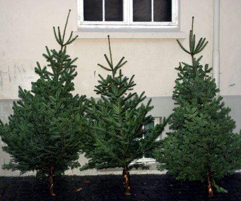 Salg av juletrær. Juletre. Julefeiring.  FOTO: SCANPIX