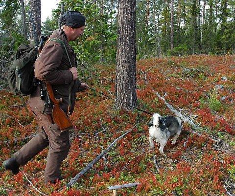 Klare: Jegerne i fire Valdreskommuner er klare til å ta prøver av hjorteviltet de feller under jakta. (Foto: arkiv)