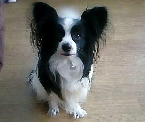 FAMILIEMEDLEM: – Vi har mistet et familiemedlem og en venn, og det er ganske tøft med en hund man har hatt i sju år. Det var ikke akkurat dette vi hadde ønsket oss til jul, sier June Rognstad.