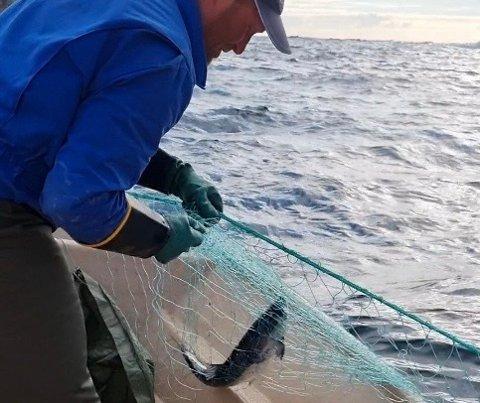 FÅR IKKE FORLENGET FISKETID: Ørjan Furøy skulle gjerne bidratt til å fiske opp pukkellaksen før den kom opp i elevene. Foreløpig er det ikke det noe Miljødirektoratet tillater. Foto: Stian Furøy