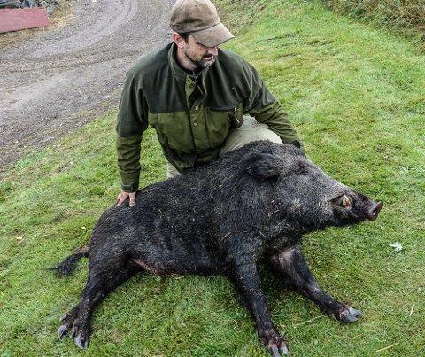 JAKT NØDVENDIG: Kampen mot villsvin kan bli intensivert framover. Her er Henrik Bjerkvik i Våler med et av flere villsvin han har felt i høst.
