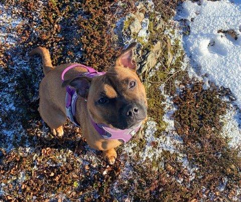 Hunden Zelda kom seg heldigvis løs, da en mannsperson skal ha plukket henne opp og lagt på sprang på Sørvågen torsdag.