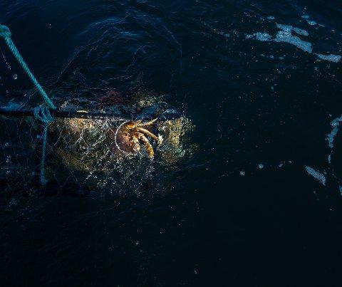 Bare to av de seks krabbeteinene var sånn som de skulle da Paul Fraas skulle hente dem opp lørdag.