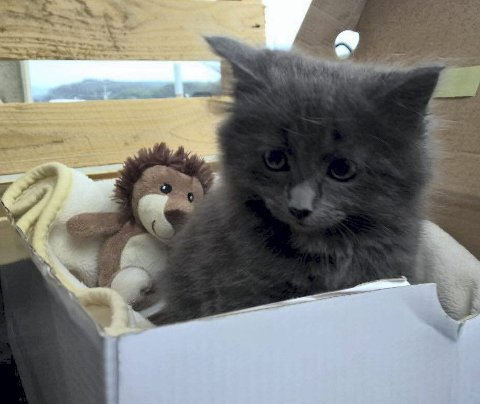 Det var den fire måneder gamle kattungen «Minni» som mandag måtte avlives etter å ha blitt skadet på motorveien i Olsviktunnelen. En familie på seks fra Askøy har meldt seg som eiere.