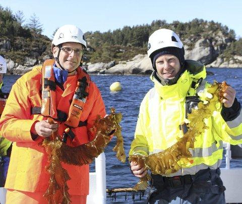 Daglig leder Harald Sveier (t.v.) i Ocean Forest og  Anders Karlsson-Drangsholt i Bellona holder frem fangsten under innhøsting av sukkertare.