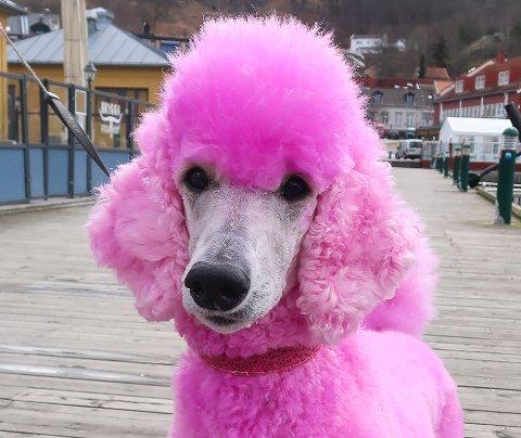 SJARMØR: Den eneste pelsen til Freyja som ikke er farget rosa, er selve ansiktet.