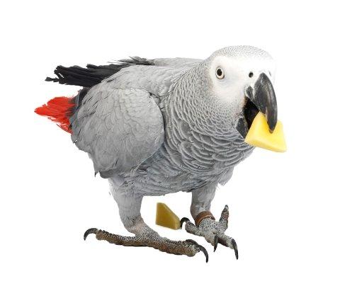 Ein hytteeigar i Ølvesvegen har fått besøk av ein papegøye som har slått seg til ro og nektar å forlata hytta. Politiet ber om tips om eigaren.