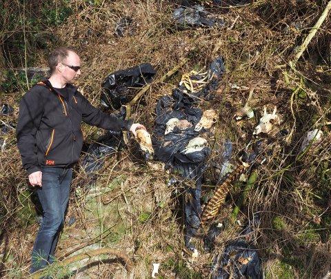 Kim Raudstein oppdaga at nokon har dumpa mykje slakteavfall i ei vegskråning på Raudstein.