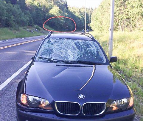 MØTTE ELG: Elgen måtte avlives og bilen fikk materielle skader. Heldigvis gikk det bra med føreren av bilen, Stian Lie Reime fra Oppegård. Etter elgpåkjørselen ba han kommunen eller fylkeskommunen fjerne vegetasjonen som vokser tett på veien.