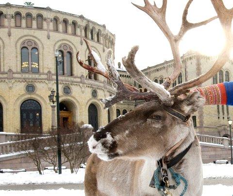 Oslopolitiet fikk melding om påkjørt reinsdyr, men reinen var slett ikke i Oslo.