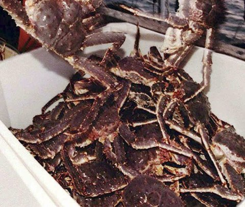 KONGEKRABBE: Mann ble dømt til ulovlig fiske. Illustrasjonsfoto