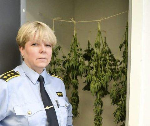 VEMMELIG LUKT: Torill Sorte blir ikke kvitt de åtte hasjplantene med det første. Nå skal de tørke i Mjøndalen - før de blir sendt til Kripos i Oslo - for nærmere undersøkelser. FOTO: Tore Shetelig