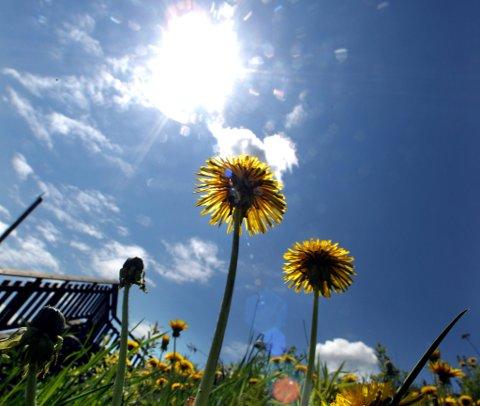 SOL: Det fine sommerværet fortsetter ut helga. Foto: Roar Grønstad.