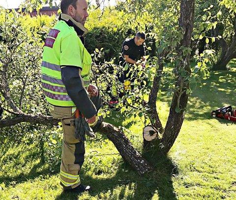 KAPPET LØS: Det var dette frukttreet i hagen på Tolvsrød brannvesenet måtte kappe for å få løs hageeieren, som satte foten fast i en grein under plenklipping.