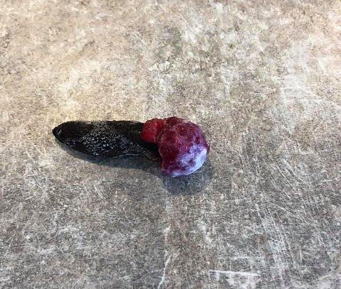 FROSSEN: Ingvild Eline Jon fant sneglen med en bringebærhatt