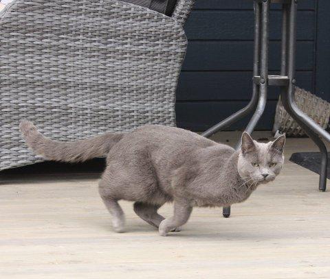 Skummel fotograf: Her gjelder det å komme seg raskt unna ser det ut til at katten Gandalf tenker.