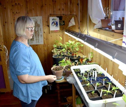 Innearbeid: Siden i januar har Marianne Kasbohm brukt mye tid til å gjøre hageplantene klare inne i huset.