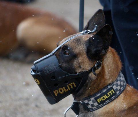 ÅPNER FOR AKSJONER MED POLITIHUND PÅ SKOLER: Rogaland Frp vil sette inn politihunder på videregående skoler som et tiltak for å forebygge narkotikabruk.