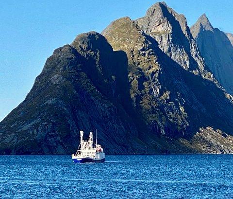"""STORFANGST: 33 meter lange """"Midøy Viking """"fikk søndag 220 tonn sild i Reinefjorden. Nå ber fiskarlaget de store båtene om å holde seg unna Reinefjorden."""
