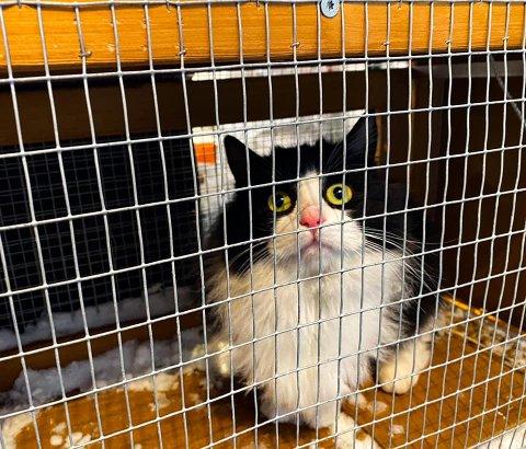 VILLKATT SOM BLE SKADET: Denne villkatten ga etter hvert klare tegn på at den ikke hadde det bra.  Det var ansatte ved Empus som reagerte på katten og den ble fanget for å undersøke den nærmere.