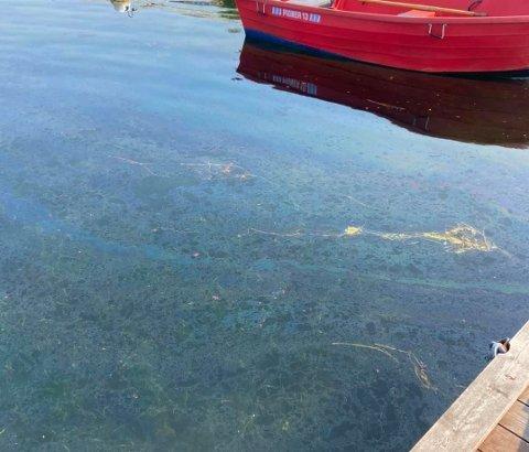 LEKKASJE: Slik så det ut i vannet ved Budalstranda på Tjøme lørdag formiddag.