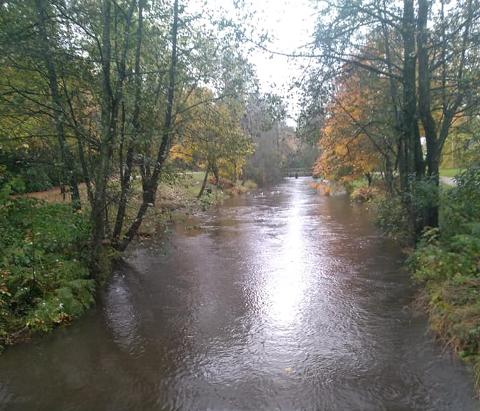 Elva renner nesten over i Sandvedparken, søndag 25. oktober.