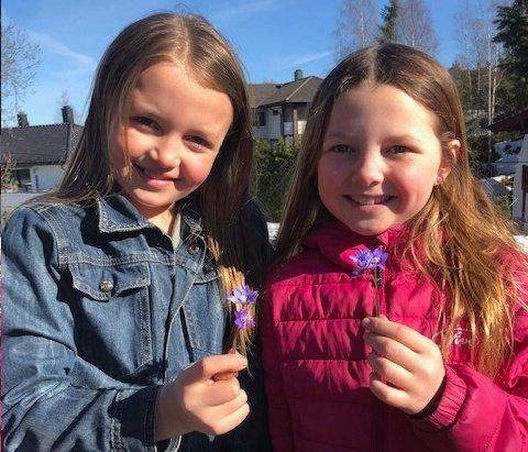 SIKKERT VÅRTEGN: Anna og Marie ble glade over å finne blåveis.