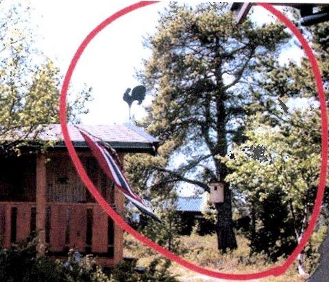PÅ FEIL SIDE AV GRENSEN: Dette store furutreet ved hytta til Tor Kolloen og familien ble felt da Nord-Fron kommune skulle grave til vann- og avløpsledning på Kvamsfjellet. I treet var det både fuglekasse og reir.