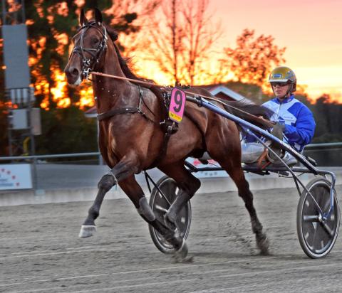 GALOPP: Ecurie D. og Björn Goop lyktes ikke i Paris. Hesten som trenes på Ulleberg Gård var spilt ned til 1,40 i odds som stor favoritt.