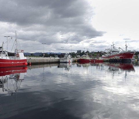 Den nye fiskerihamna i Kobbebukta på Halsnøy kan vera ein medverkande faktor til at fleire driv fiske.