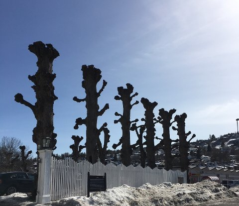 PENT VÆR: Hele 18,9 grader målte makstemperaturen i Drammen onsdag 18. mars.