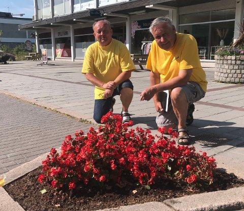 Blir ødelagt: Torbjørn Sletten (t.h.) og vanningssjef Tore Hoen opplever stadig at det blir kjørt og parkert i blomsterbedene i Stasjonsgata slik at blomstene blir ødelagt.
