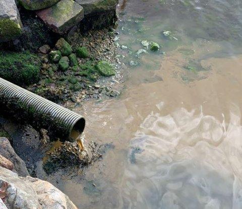 TM anlegg har sendt ein rekke bilde til kommunen for å visa korleis ståa er i strandsona deira.