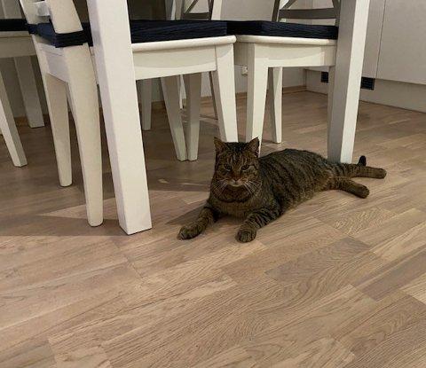 NI LIV: Katten Kyle har trolig haiket med en lastebil fra Trondheim ned til Østlandet.