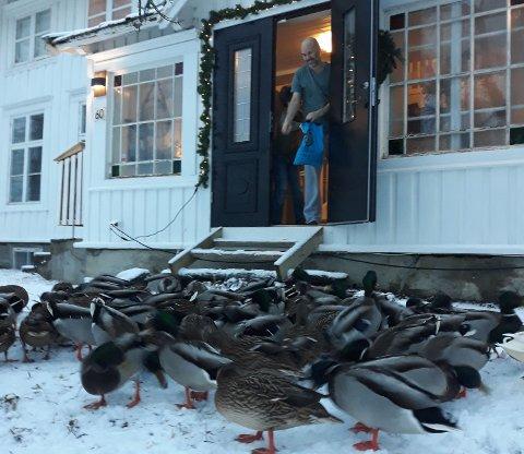 Kenneth Bodøgaard og familien fikk besøk utenfor døra.