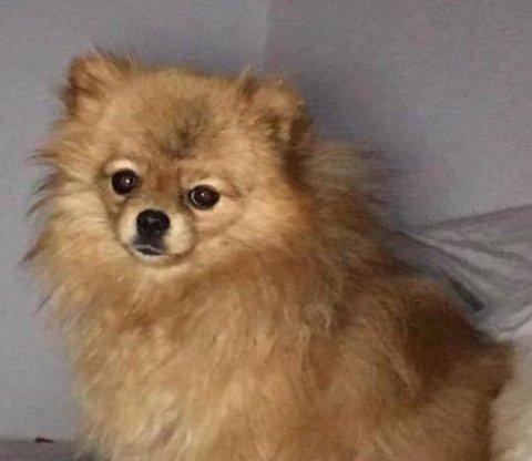 NANI: Slik ser den elleve måneder gamle hunden ut.