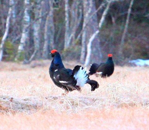 FUGLESANG: NRK varter opp med seks timer fuglesang natt til 1. mai. ArkivBILDE