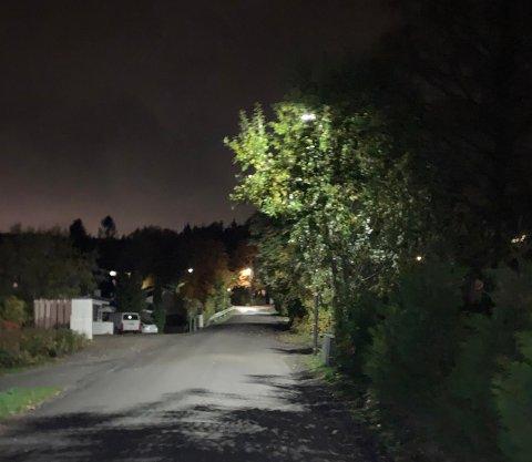Beboerne er bekymret. Vegetasjon som dekker for gatelysene gjør veien ekstra trafikkfarlig.