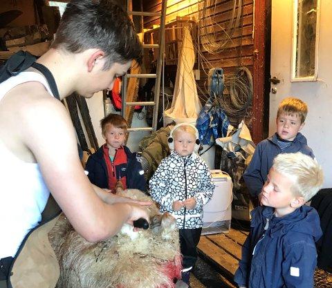 SLAKT: Bjørnar Seljeskog fekk mange spørsmål då førskuleungane fekk vera med på lammeslakt.