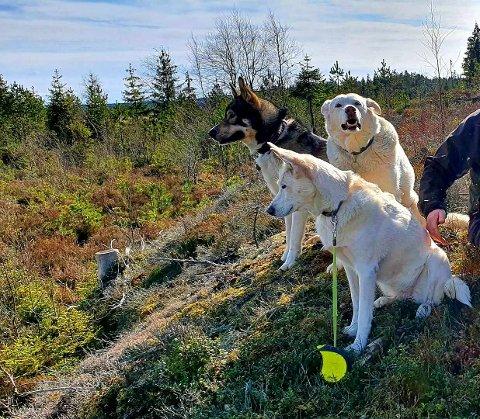 På tur: Anine Heiberg Tollefson var på tur med tre hunder i skogen ved Grytelandstjernet. – Noen drev med jakt med hund, jeg opplevde dette som litt skummelt da både hund og to rådyr hadde retning mot oss, ca 50 meter unna. Og to skudd kom da rett etter denne observasjonen, synes hun.