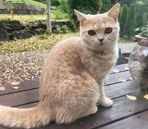 13.11: Katt forsvunnet.