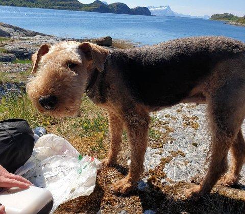 Denne terrieren ble funnet alene på Store Hjartøya søndag.